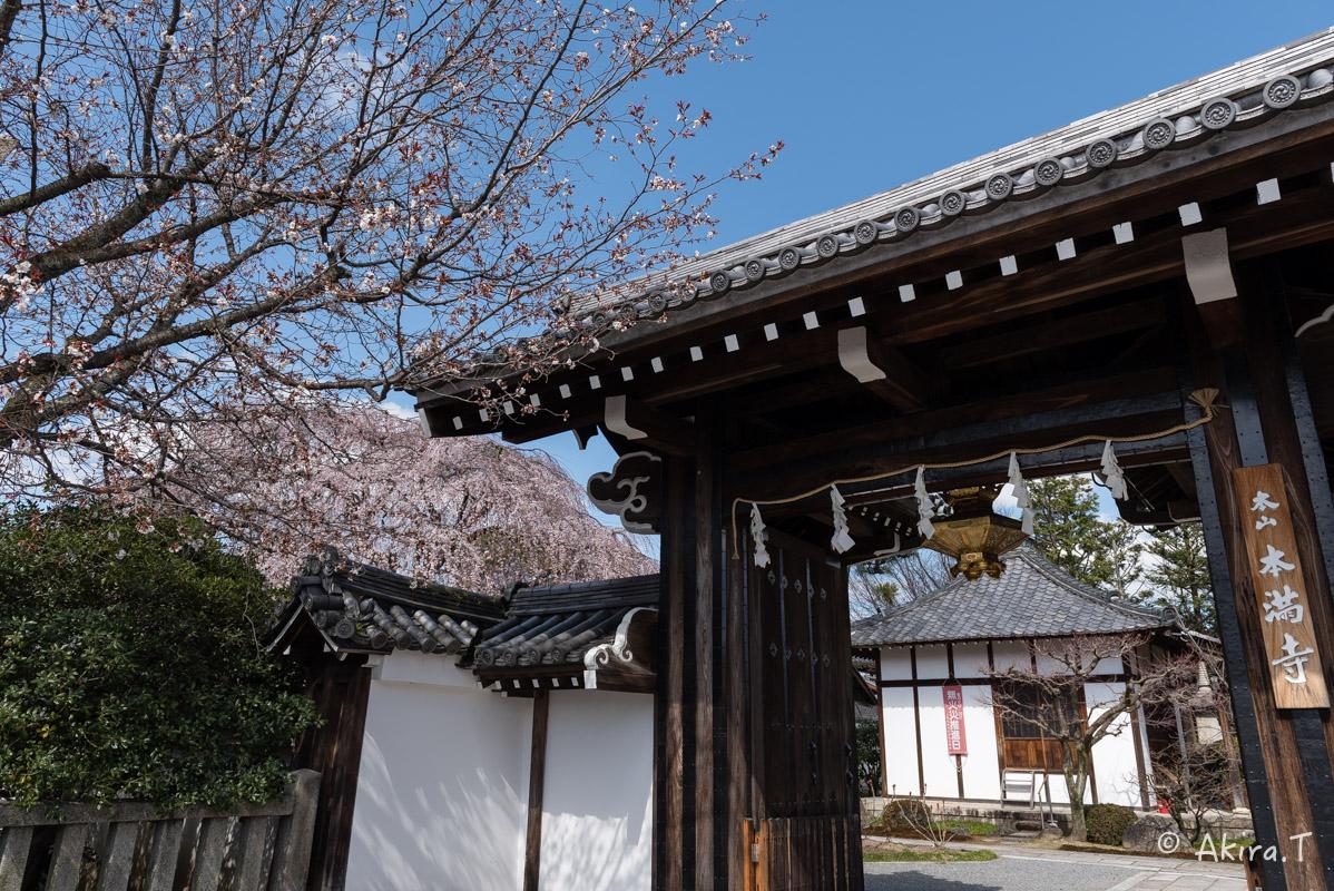 京都の桜 2016 〜本満寺〜_f0152550_22304371.jpg
