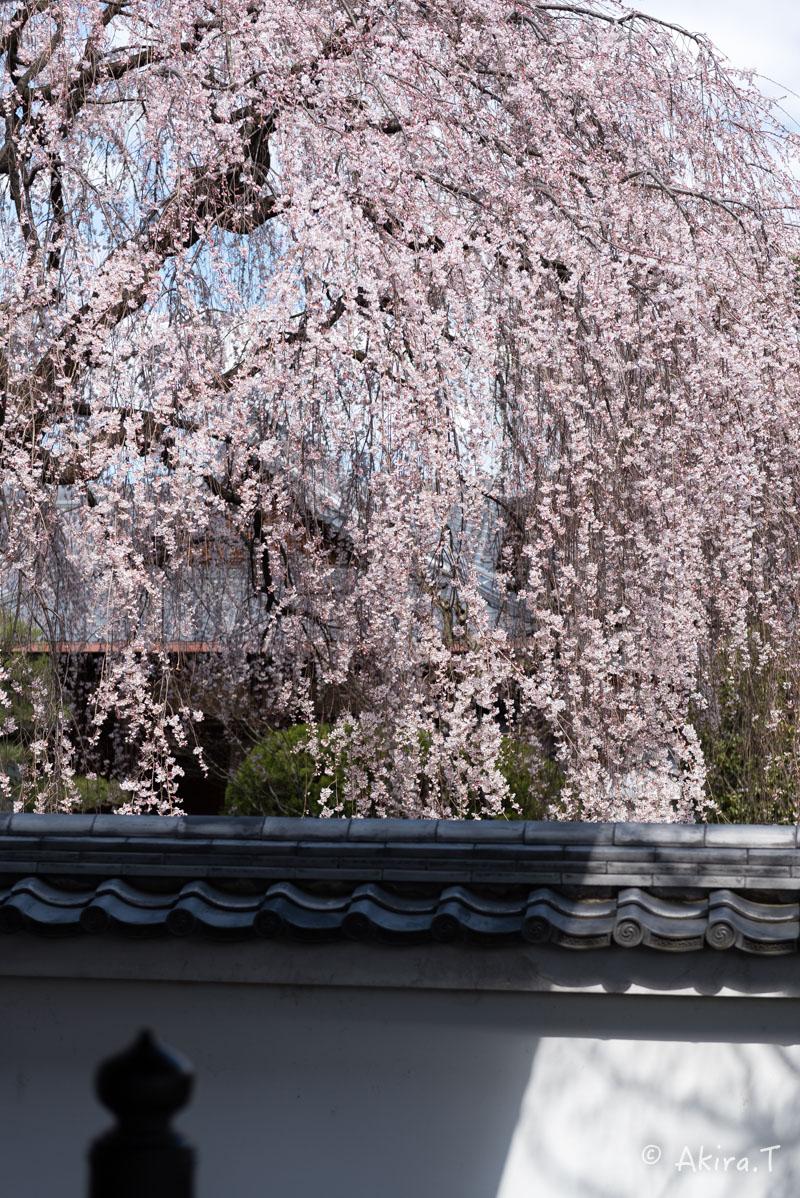 京都の桜 2016 〜本満寺〜_f0152550_2230722.jpg