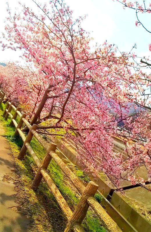ちょっぴりお花見~_b0241353_12545713.jpg