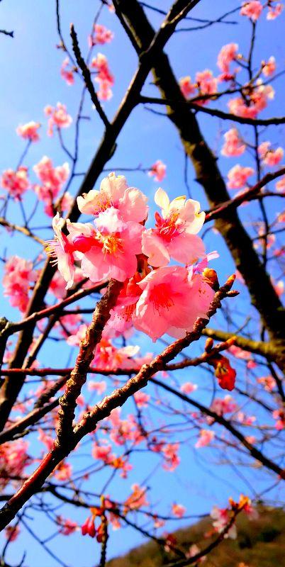 ちょっぴりお花見~_b0241353_12552068.jpg