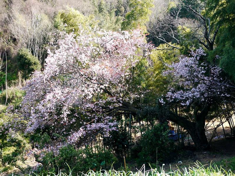 春の花咲く里山を歩く_b0093754_23184211.jpg