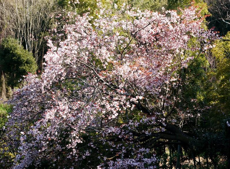 春の花咲く里山を歩く_b0093754_23185983.jpg