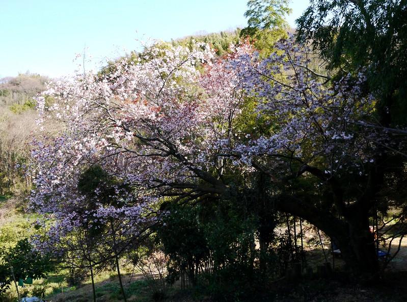 春の花咲く里山を歩く_b0093754_23191134.jpg