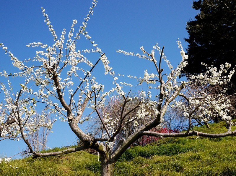 春の花咲く里山を歩く_b0093754_23194344.jpg