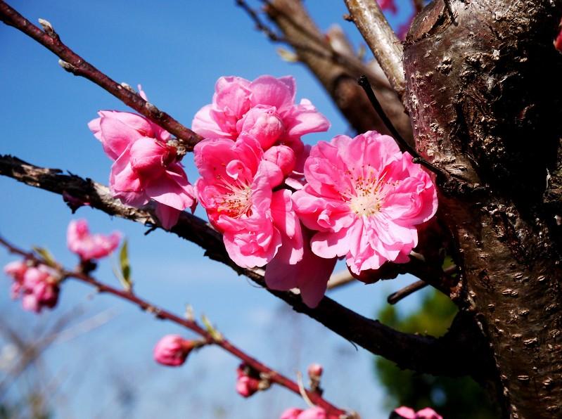 春の花咲く里山を歩く_b0093754_23342199.jpg