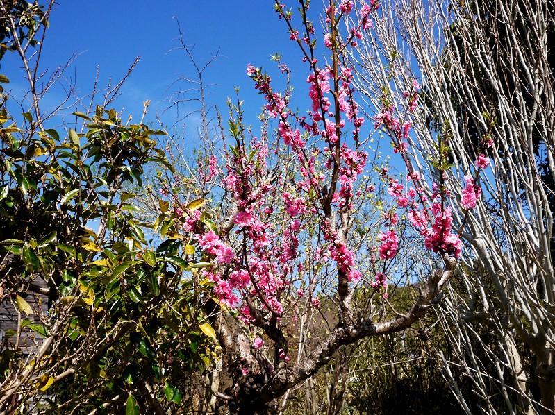 春の花咲く里山を歩く_b0093754_2334960.jpg