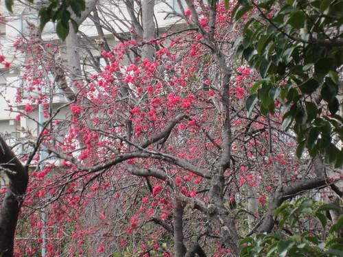 春ですね_f0256164_11285699.jpg