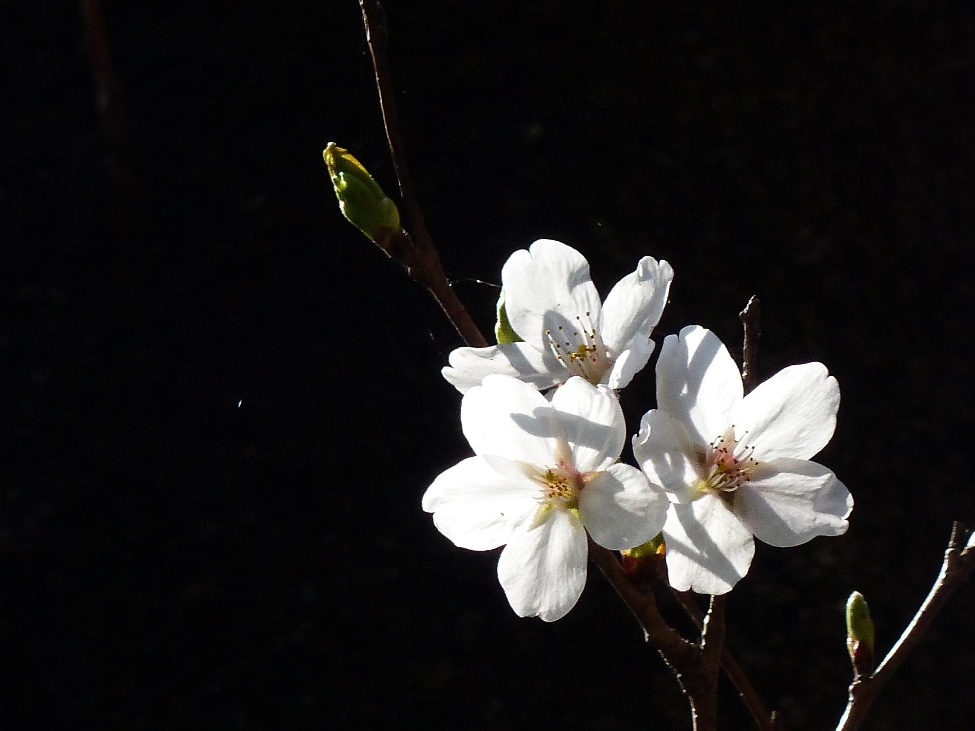 春の光_a0351368_22225445.jpg