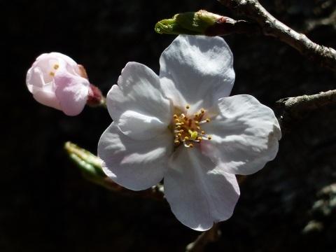 春の光_a0351368_22234247.jpg