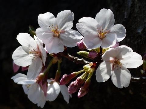 春の光_a0351368_22240063.jpg