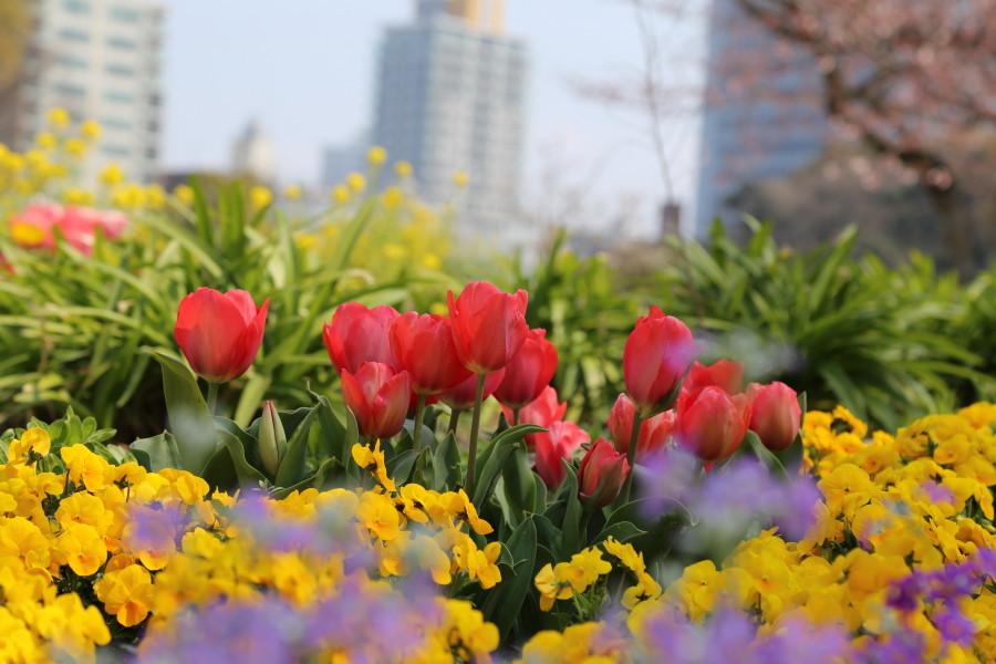 春が来た!_a0262573_23130707.jpg