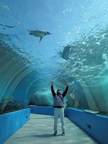 水族館はお好きですか。_b0141773_23511280.jpg