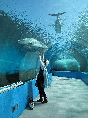 水族館はお好きですか。_b0141773_23515140.jpg