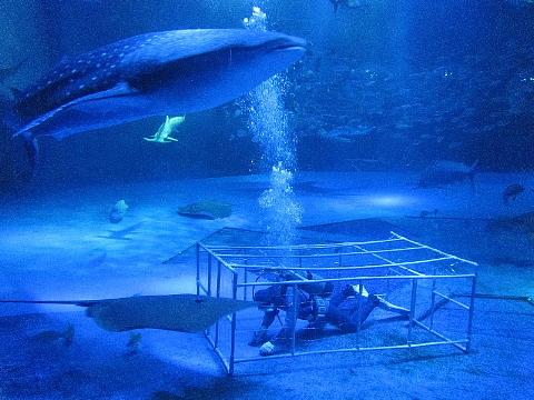 水族館はお好きですか。_b0141773_2353567.jpg