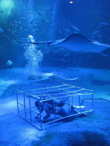 水族館はお好きですか。_b0141773_23544316.jpg