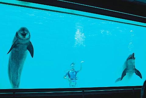 水族館はお好きですか。_b0141773_23545965.jpg