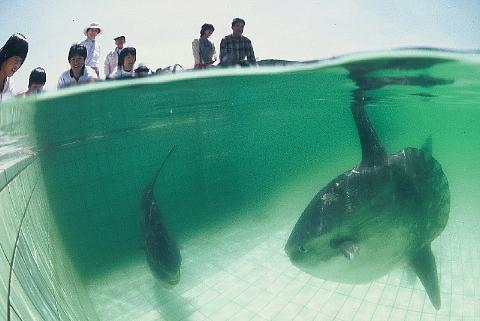 水族館はお好きですか。_b0141773_23554045.jpg