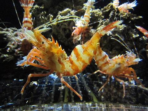 水族館はお好きですか。_b0141773_2356558.jpg