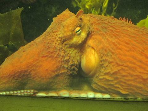水族館はお好きですか。_b0141773_23572179.jpg
