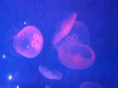 水族館はお好きですか。_b0141773_2357435.jpg