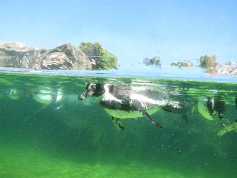 水族館はお好きですか。_b0141773_23593553.jpg