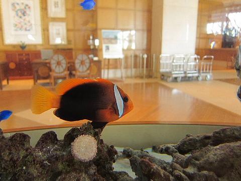 水族館はお好きですか。_b0141773_23595716.jpg