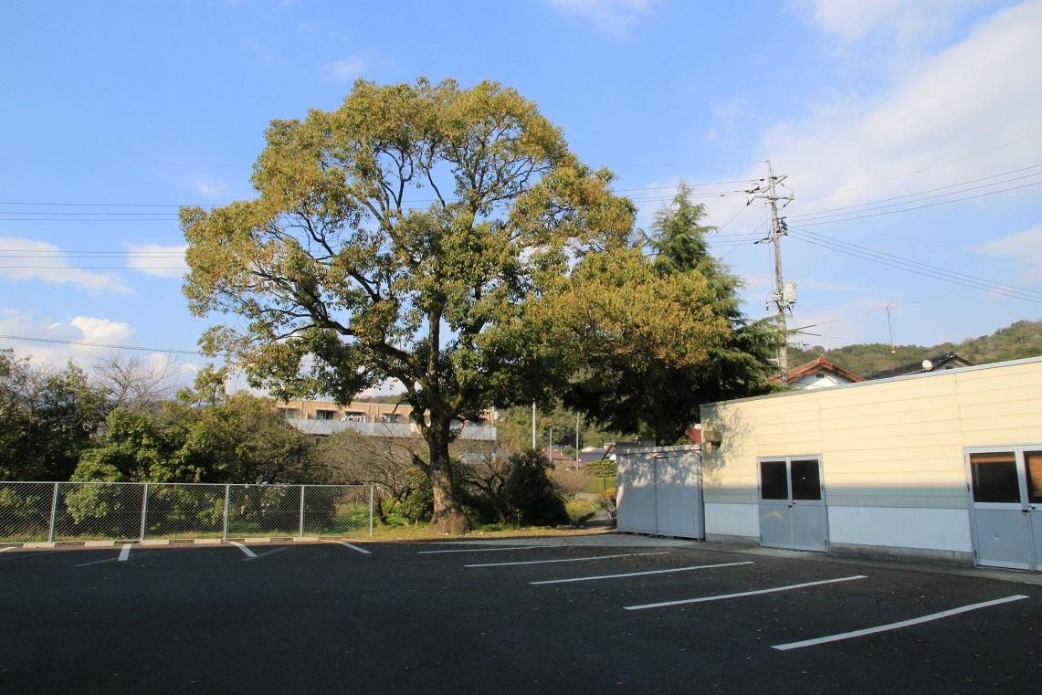 この木だけは忘れない♪^^ ~わが母校・大殿中学校~_a0107574_19264149.jpg