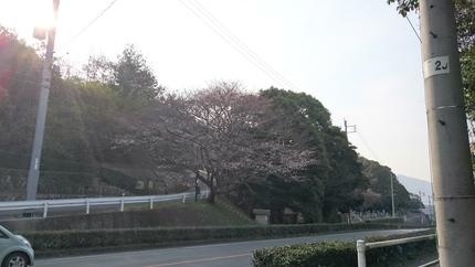 春爛漫_e0332178_15365380.jpg