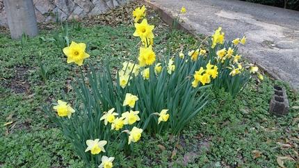 春爛漫_e0332178_15415656.jpg