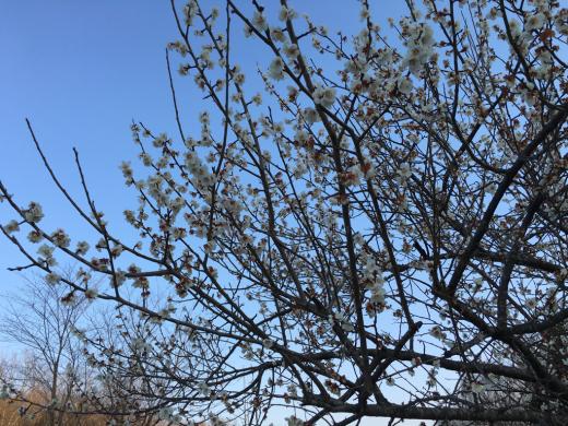 春のお彼岸が過ぎ  静かな境内に _a0274383_07023996.jpg