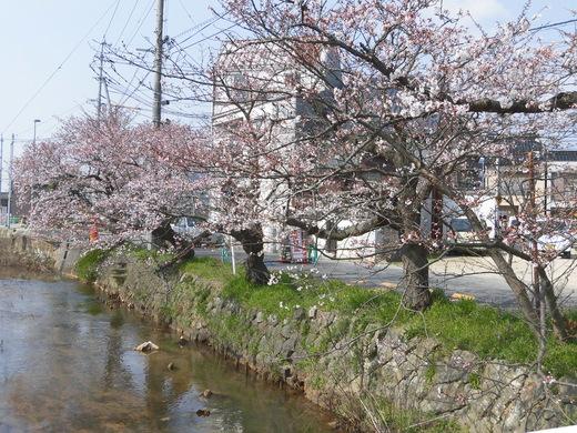 春一日_b0231886_18585471.jpg