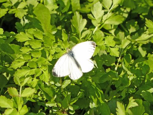 春を待つ蝶たち_d0353091_14052273.jpg