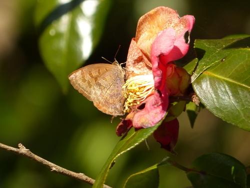 春を待つ蝶たち_d0353091_14073071.jpg