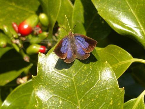 春を待つ蝶たち_d0353091_14100890.jpg
