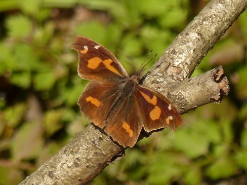 春を待つ蝶たち_d0353091_14114963.jpg