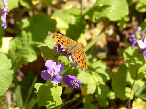 春を待つ蝶たち_d0353091_14131232.jpg