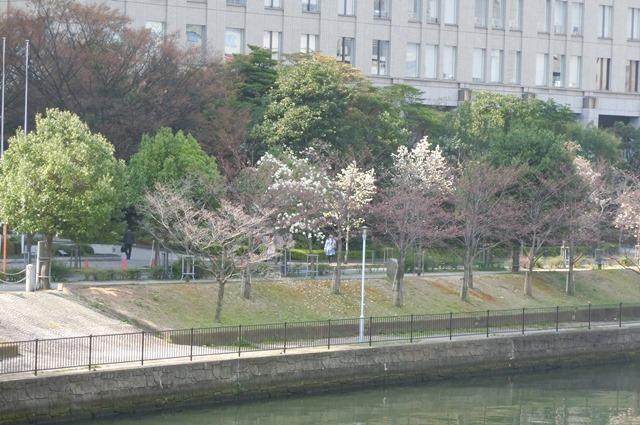 藤田八束の鉄道写真集@大阪環状線の春、桜の花が咲き観光客で大賑わい_d0181492_21511692.jpg