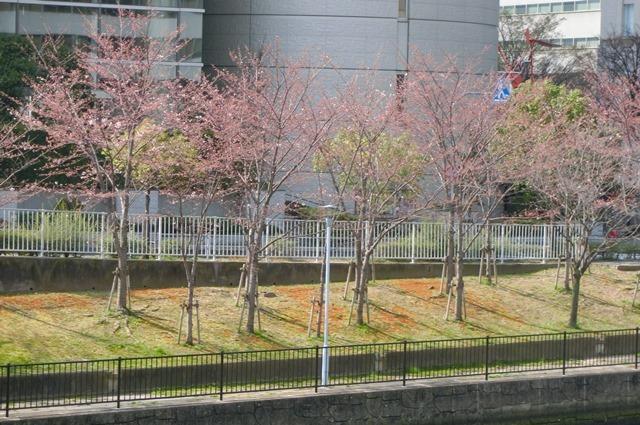 藤田八束の鉄道写真集@大阪環状線の春、桜の花が咲き観光客で大賑わい_d0181492_21512845.jpg