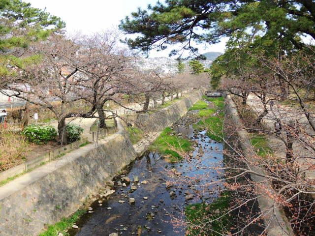 夙川と芦屋川をのんびり散歩_f0100593_13210834.jpg