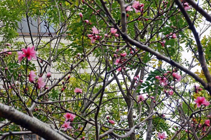 桃の花_e0016894_1310762.jpg