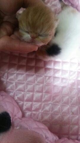 エキゾチック赤ちゃん、3日目_e0033609_1054568.jpg
