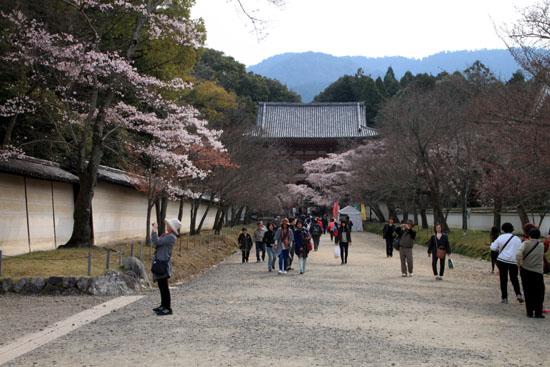 16桜だより13 醍醐寺_e0048413_202942100.jpg