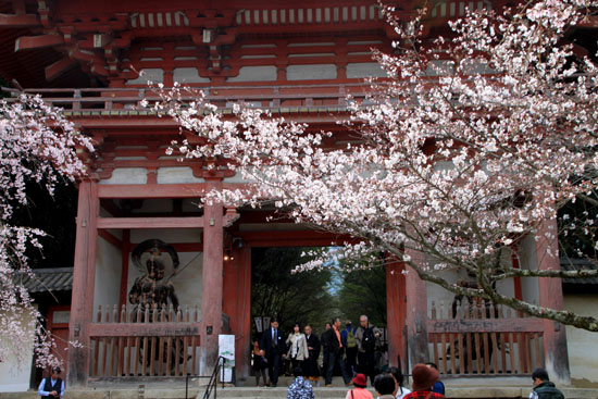 16桜だより13 醍醐寺_e0048413_20295194.jpg