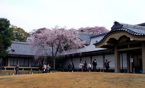 16桜だより13 醍醐寺_e0048413_20301587.jpg