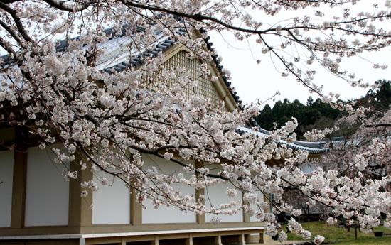 16桜だより13 醍醐寺_e0048413_20303167.jpg