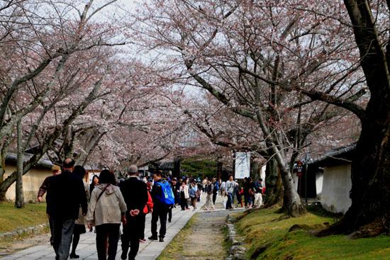 16桜だより13 醍醐寺_e0048413_2030357.jpg