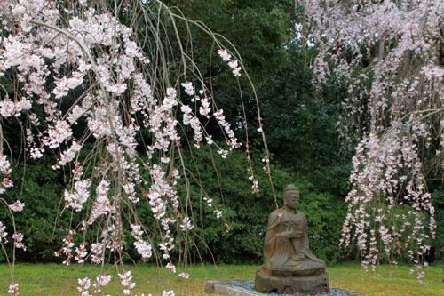16桜だより13 醍醐寺_e0048413_20314348.jpg
