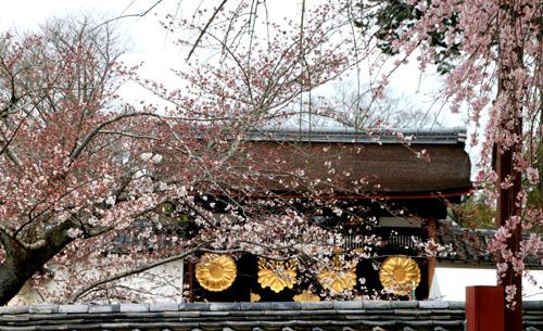 16桜だより13 醍醐寺_e0048413_2032987.jpg