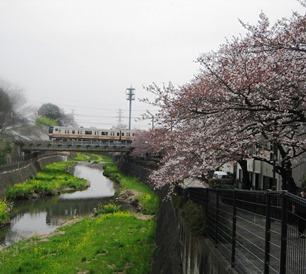 残堀川河畔にブラリお花見に!!_b0255217_15503935.jpg