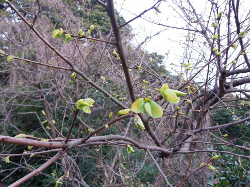春うらら。_a0125419_07415745.jpg